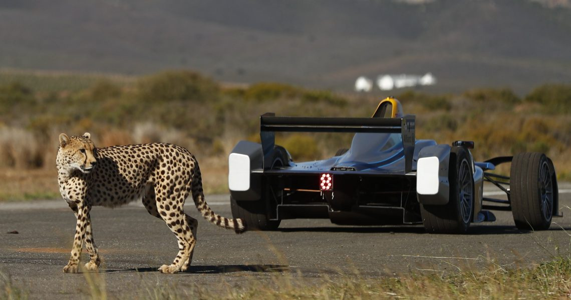 Techeetah rise to – and throw down – conservation challenge